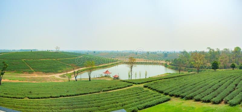 Τοπίο φυτειών τσαγιού στο τσάι Choui Fong, Chiang Rai Ταϊλάνδη στοκ φωτογραφίες