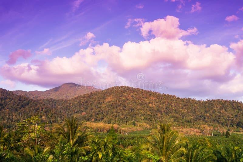 Τοπίο φύσης γεωργίας Φοινικέλαιο με τη φυτεία δέντρων καρύδων στην ανατολή, τροπικό δάσος με τα υπόβαθρα σειράς βουνών στοκ εικόνα με δικαίωμα ελεύθερης χρήσης