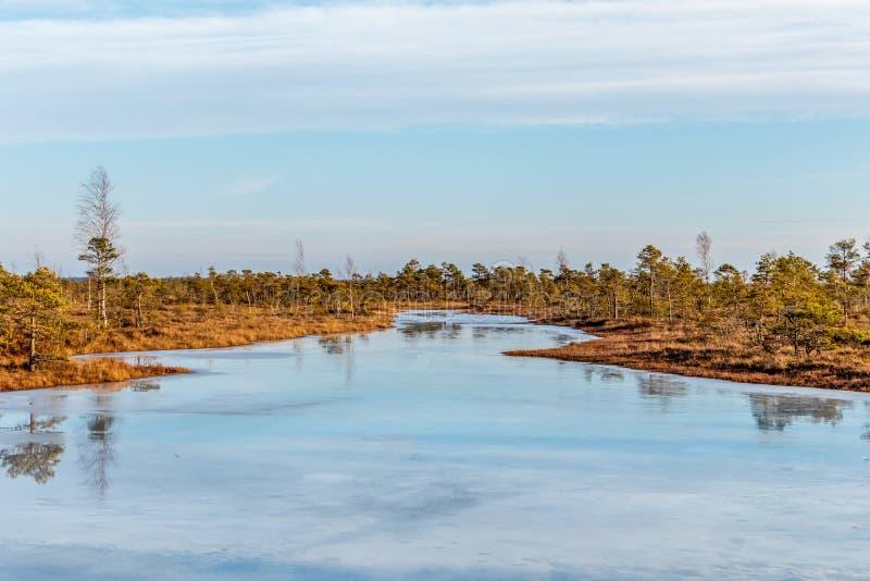 Τοπίο φύσης με το παγωμένο κρύο έλος με το παγωμένο έδαφος, πάγος στη λίμνη ελών και φτωχή βλάστηση ελών στοκ εικόνα με δικαίωμα ελεύθερης χρήσης