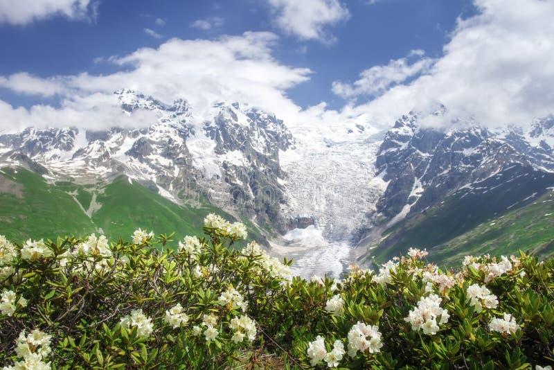 Τοπίο φύσης Svaneti τη θερινή ημέρα με το μπλε ουρανό και τα άσπρα λουλούδια Χιονώδεις αιχμές των δύσκολων βουνών στοκ φωτογραφία με δικαίωμα ελεύθερης χρήσης