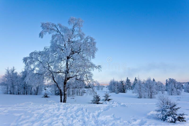 Τοπίο χειμερινού χιονιού, υψηλοί βάλτοι, Βέλγιο στοκ εικόνα