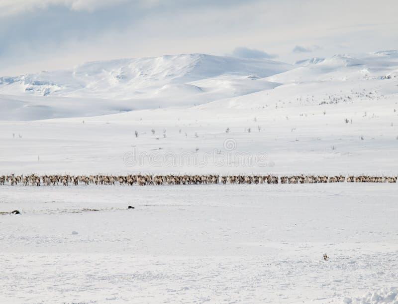 Τοπίο χειμερινών βουνών με τον τάρανδο στοκ φωτογραφία με δικαίωμα ελεύθερης χρήσης