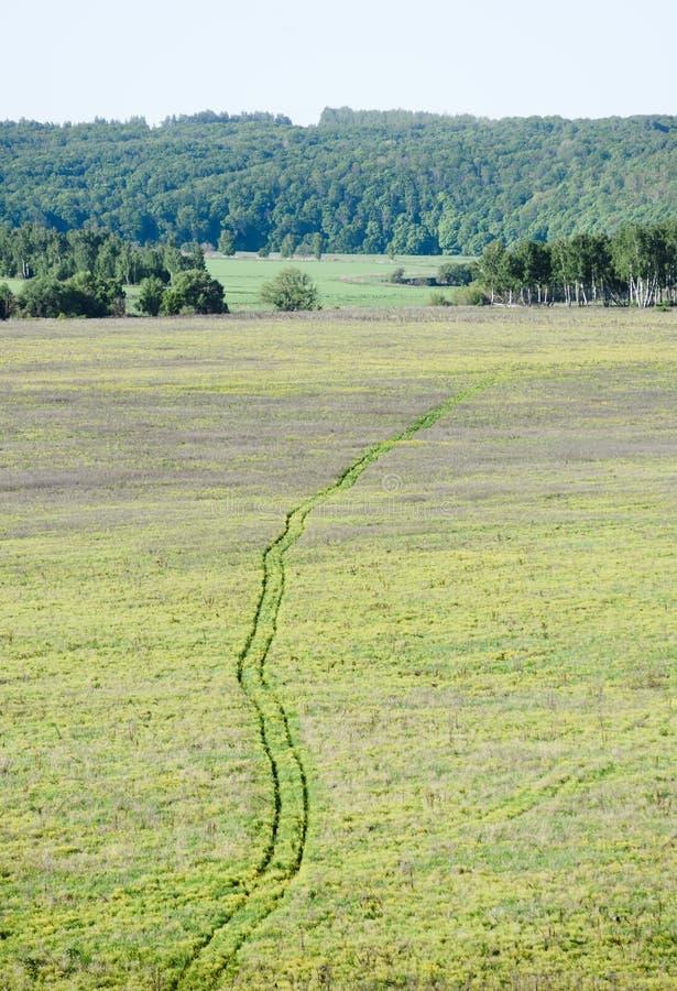 Τοπίο χώρας Διαδρομή ροδών στην πράσινη χλόη με το πράσινο δάσος στο υπόβαθρο στοκ εικόνα