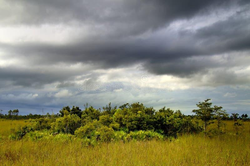 τοπίο 11 everglades στοκ φωτογραφίες με δικαίωμα ελεύθερης χρήσης