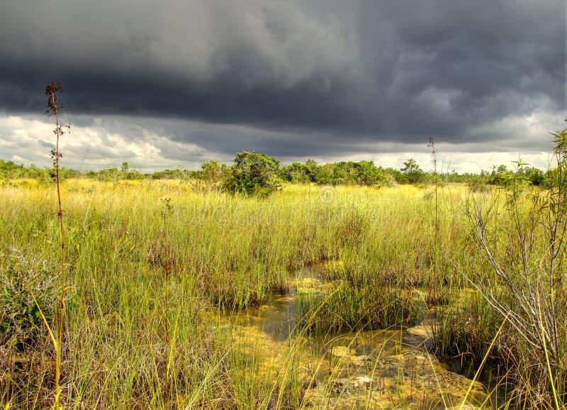 τοπίο 12 everglades στοκ εικόνες