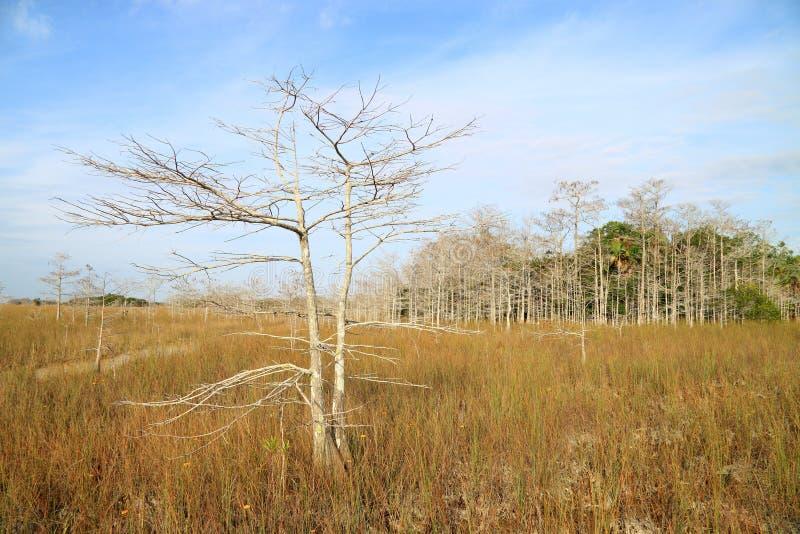 τοπίο 14 everglades στοκ εικόνες