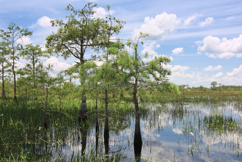 τοπίο 8 everglades στοκ εικόνα με δικαίωμα ελεύθερης χρήσης