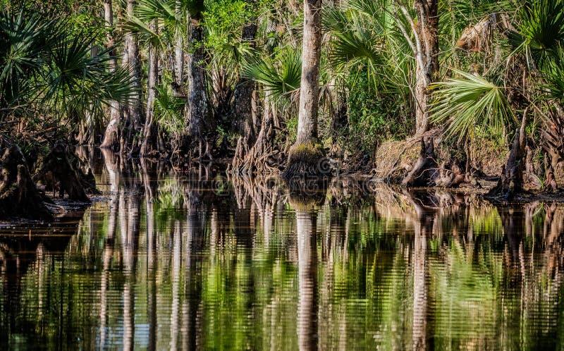 Τοπίο Everglades με το βόστρυχο και το νερό κυπαρισσιών στοκ εικόνες