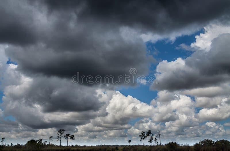 Τοπίο Everglades, σύννεφα στοκ εικόνες