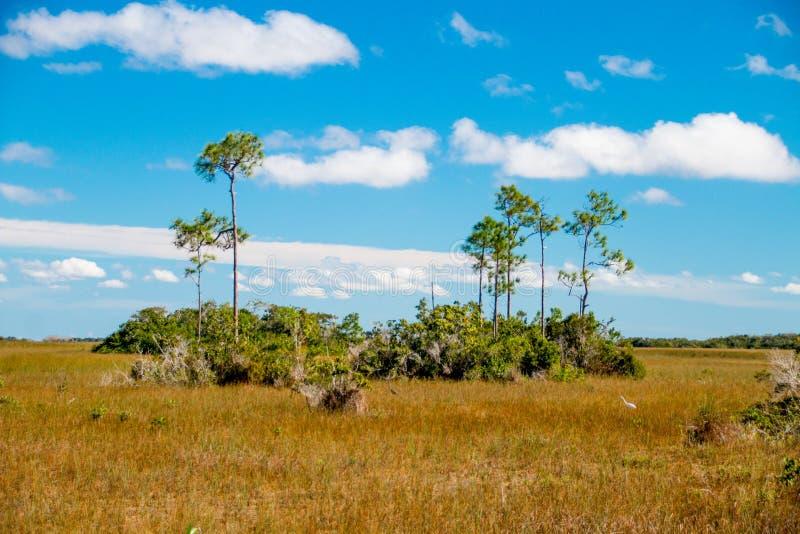 Τοπίο Everglades στοκ εικόνες με δικαίωμα ελεύθερης χρήσης