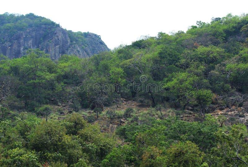 Τοπίο Hill στοκ φωτογραφίες με δικαίωμα ελεύθερης χρήσης