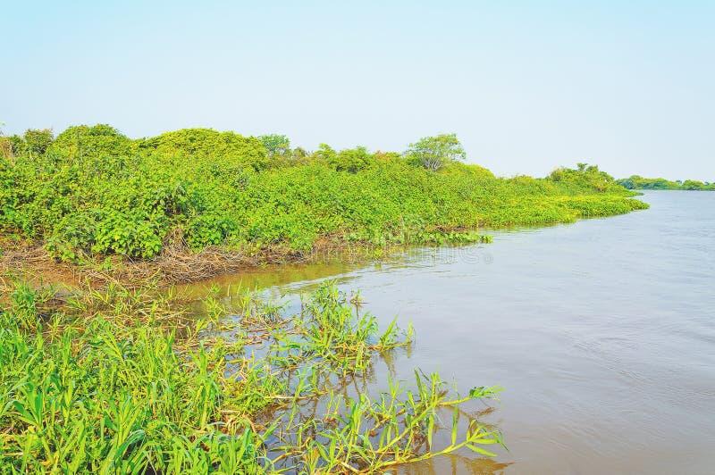 Τοπίο Pantanal με τον ποταμό και την πράσινη βλάστηση γύρω στοκ φωτογραφία με δικαίωμα ελεύθερης χρήσης