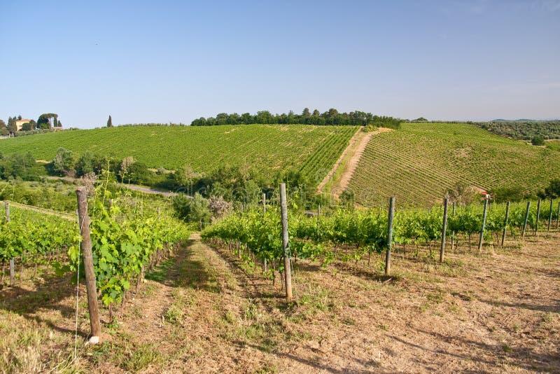 Download τοπίο Tuscan χαρακτηριστικό Στοκ Εικόνες - εικόνα από sabina, ρώμη: 17057256