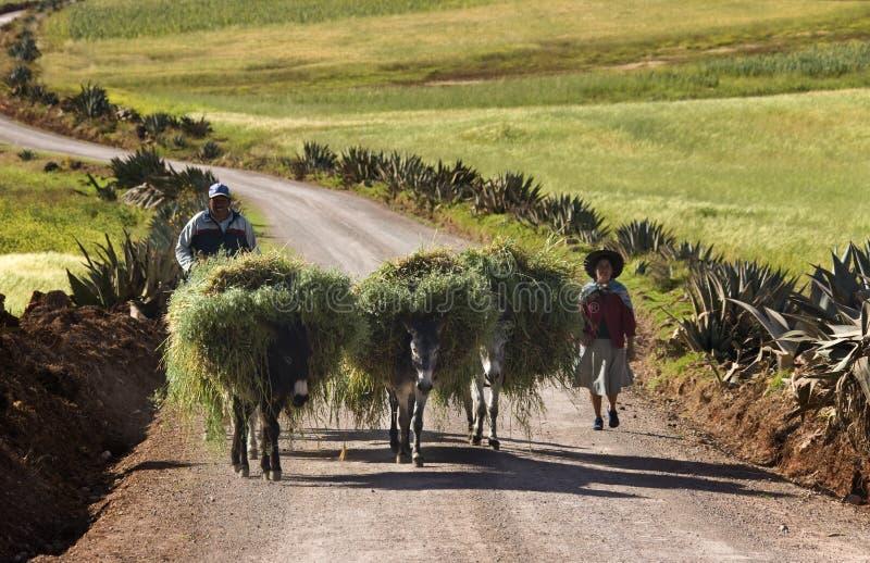 Τοπικοί αγρότες - Περού - Νότια Αμερική στοκ εικόνες