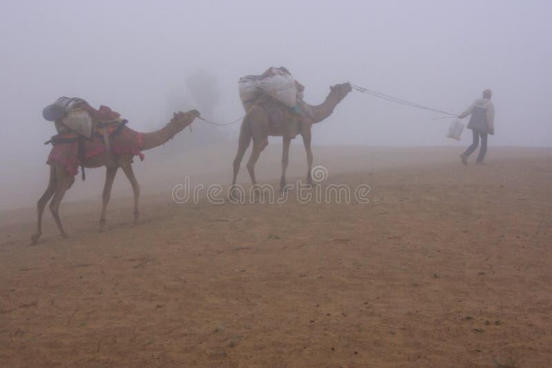 Τοπικός οδηγός με τις καμήλες που περπατούν στην ομίχλη ξημερωμάτων, Thar deser στοκ εικόνα με δικαίωμα ελεύθερης χρήσης