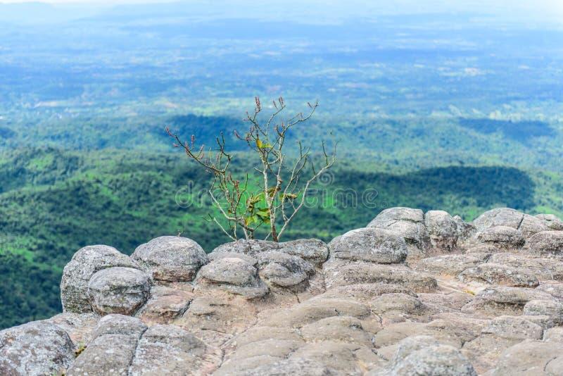 Τοπικό LAN Hin Pum (φυσικό φαινόμενο) σε Phu Hin Rong Kla εθνικό PA στοκ φωτογραφίες