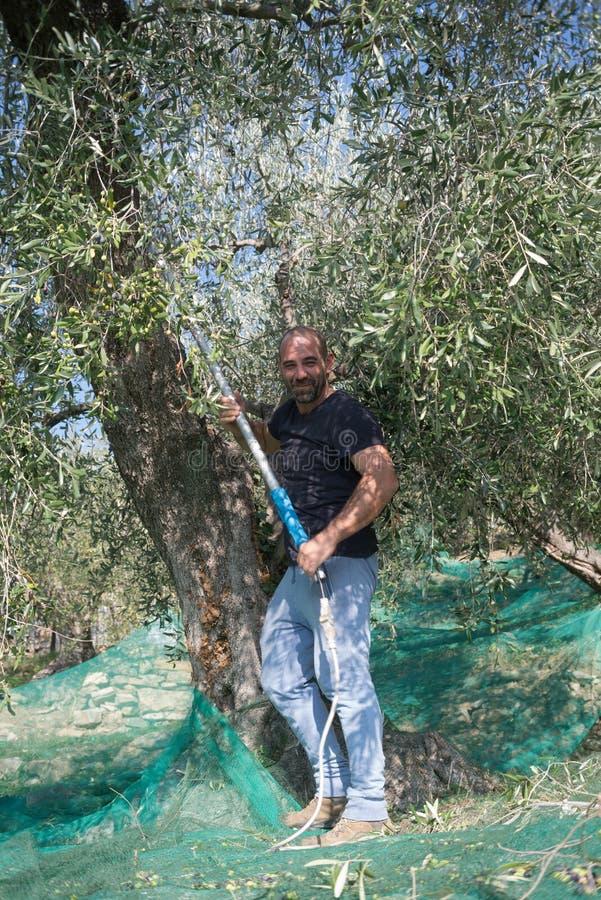 Τοποθέτηση αγροτών χαμόγελου στον κήπο ελιών στοκ φωτογραφία