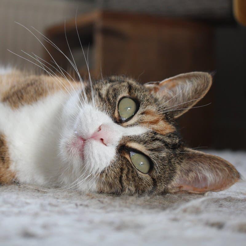 Τοποθέτηση γατών στοκ εικόνες