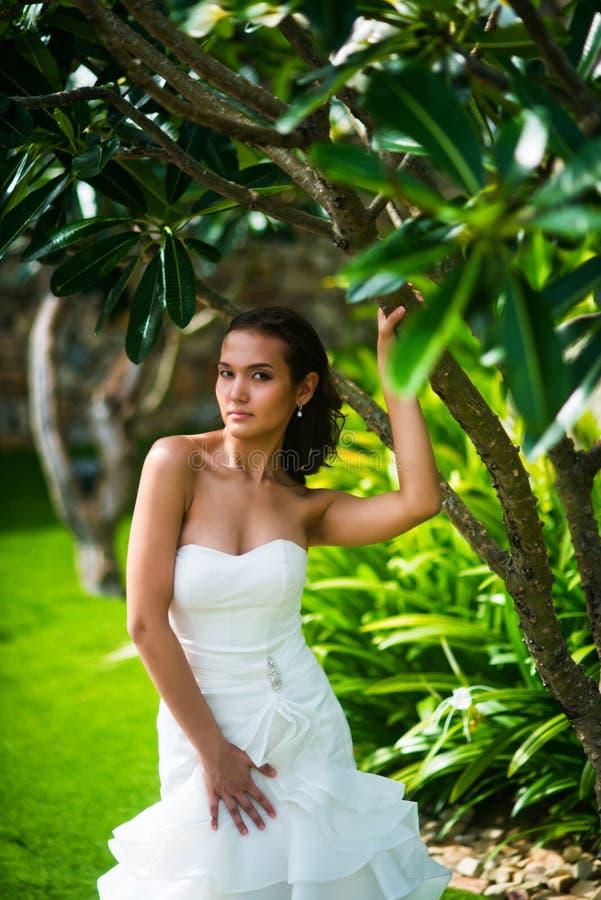 Τοποθέτηση νυφών στο γαμήλιο φόρεμα με το τροπικό δέντρο στοκ φωτογραφίες