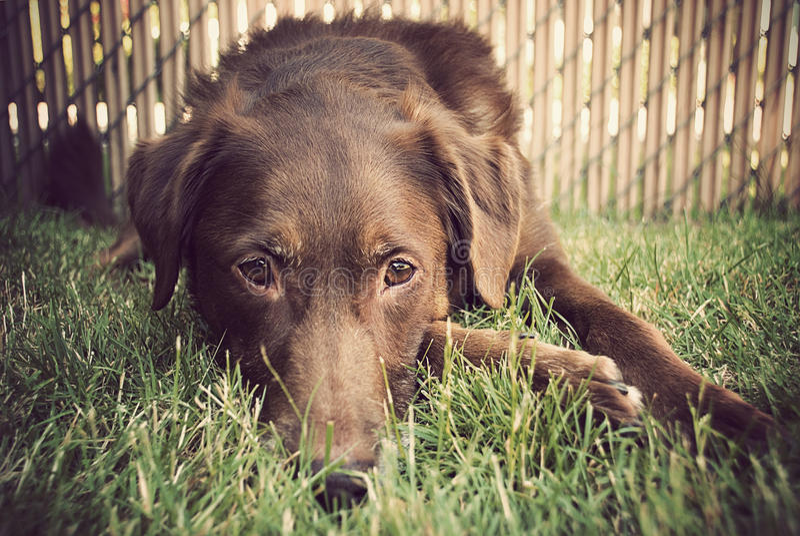 τοποθέτηση χλόης σκυλιών στοκ φωτογραφία με δικαίωμα ελεύθερης χρήσης
