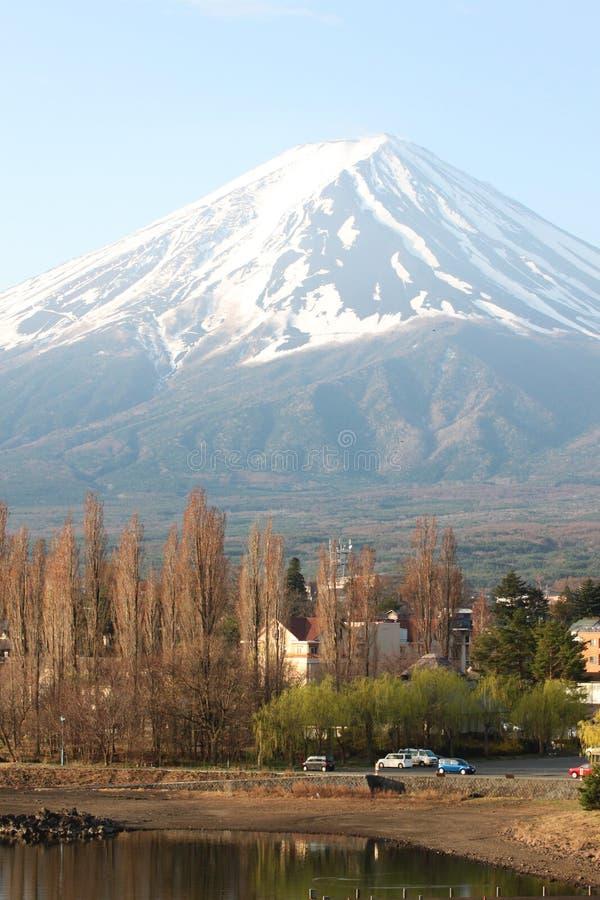 Τοποθετήστε το Φούτζι και τα πράσινα δέντρα πεύκων στοκ εικόνες