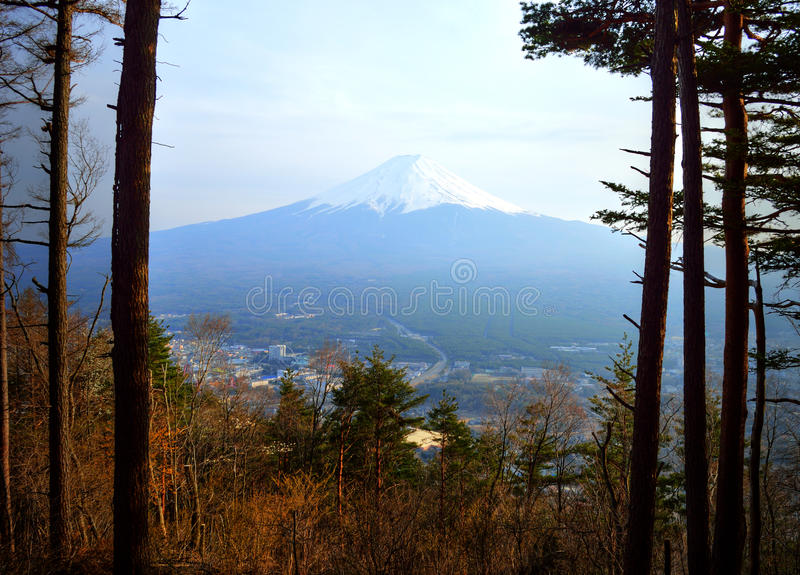 Τοποθετήστε το Φούτζι μέσω των δέντρων στοκ εικόνες με δικαίωμα ελεύθερης χρήσης