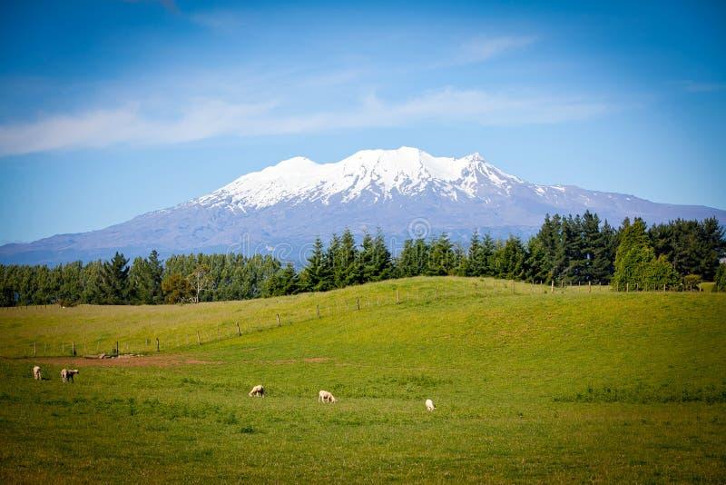 Τοποθετήστε Ruapehu από το αγρόκτημα χώρας βασιλιάδων στοκ φωτογραφία με δικαίωμα ελεύθερης χρήσης