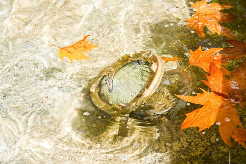 Τοποθετημένος λαμπτήρας πατωμάτων υποβρύχιος - εικόνα με το διάστημα αντιγράφων στοκ εικόνες με δικαίωμα ελεύθερης χρήσης