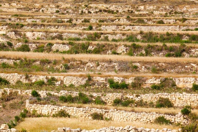 Τοποθετημένος στη σειρά διατηρώντας τοίχος με τις εγκαταστάσεις και τους θάμνους στοκ εικόνα με δικαίωμα ελεύθερης χρήσης