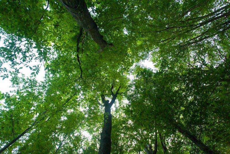 Τοπ άποψη δέντρων στοκ φωτογραφίες με δικαίωμα ελεύθερης χρήσης