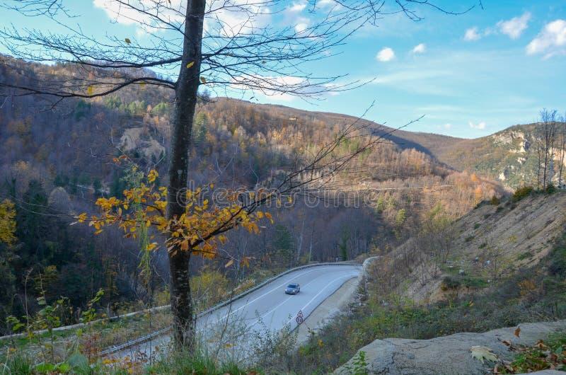 Τοπ άποψη δρόμων και αυτοκινήτων ασφάλτου το χρυσό φθινόπωρο στοκ εικόνες