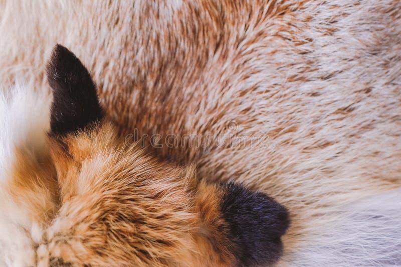Τοπ άποψη κινηματογραφήσεων σε πρώτο πλάνο της χνουδωτής σύστασης της ζωηρόχρωμης πραγματικής ζωικής γούνας αλεπούδων στοκ εικόνες με δικαίωμα ελεύθερης χρήσης