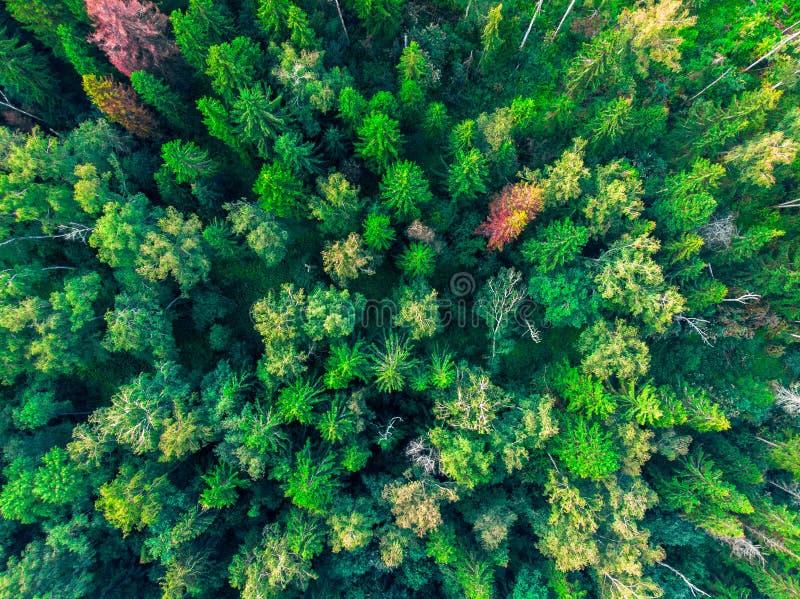 Τοπ άποψη σχετικά με τις κορυφές των πράσινων δέντρων r στοκ φωτογραφία