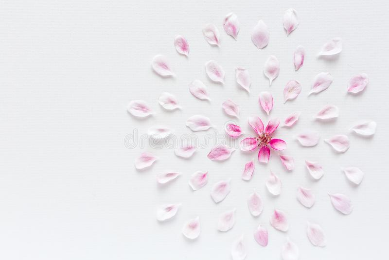 Τοπ άποψη σχετικά με το στρογγυλό σχέδιο των λουλουδιών sacura που βάζουν στο άσπρο υπόβαθρο Έννοια της αγάπης και της άνοιξη Dof στοκ φωτογραφία με δικαίωμα ελεύθερης χρήσης