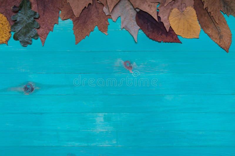 Τοπ άποψη του ξηρού εμβλήματος φύλλων φθινοπώρου πέρα από το ξύλινο μπλε υπόβαθρο με το διάστημα αντιγράφων στοκ φωτογραφία με δικαίωμα ελεύθερης χρήσης