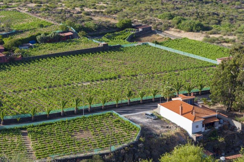 Τοπ άποψη του σπιτιού και των τομέων με τη βλάστηση στοκ φωτογραφίες