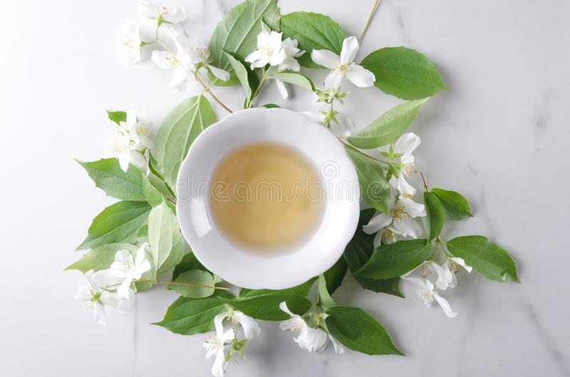 Τοπ άποψη του φλυτζανιού του πράσινου τσαγιού, resh jasmine εγκαταστάσεις στον άσπρο πίνακα Υγιές και αντιοξειδωτικό ποτό στοκ εικόνες