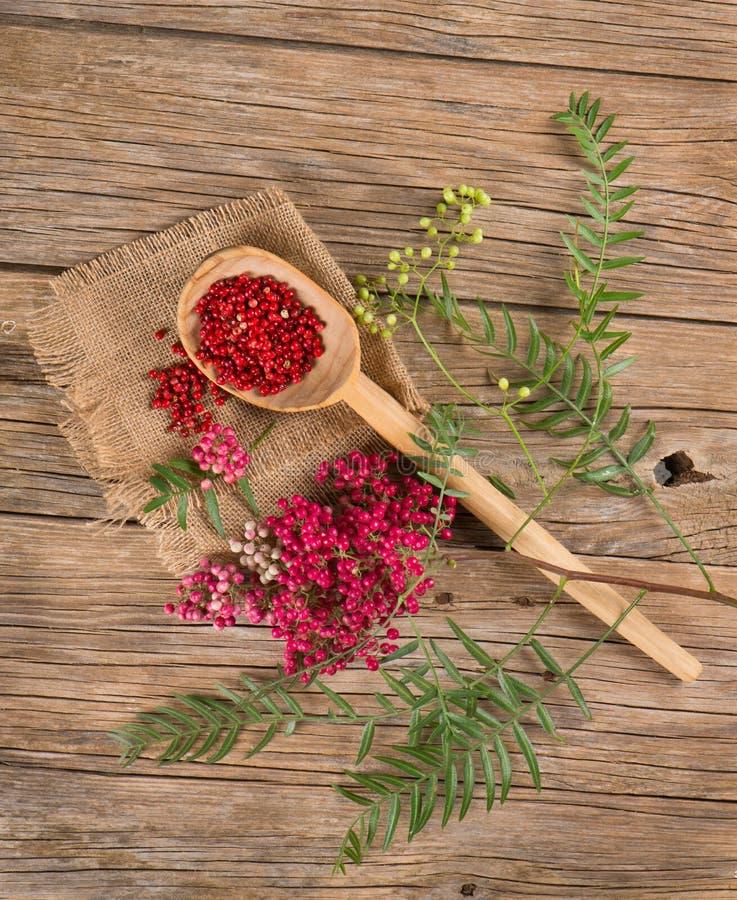 Τοπ άποψη του φρέσκου και ξηρού ρόδινου πιπεριού στοκ εικόνες με δικαίωμα ελεύθερης χρήσης