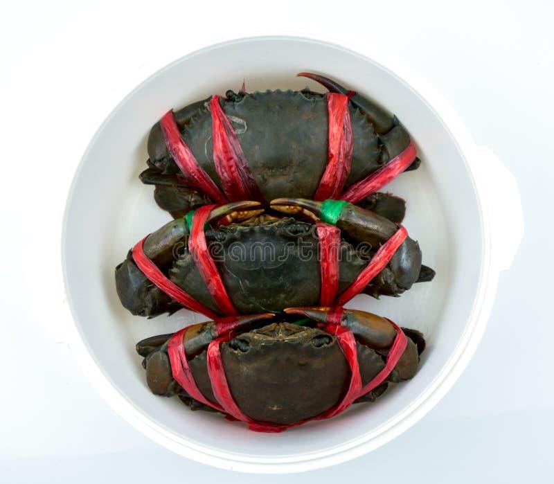 Τοπ άποψη του serrata Scylla Τρία φρέσκα καβούρια είναι δεμένα με τα κόκκινα πλαστικά σχοινιά και τακτοποιημένα τις τακτοποιημένε στοκ εικόνες με δικαίωμα ελεύθερης χρήσης