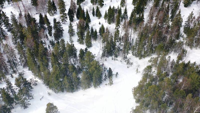 Τοπ άποψη των ανθρώπων που χάνεται στο δάσος το χειμώνα footage Η ομάδα ενεργών τουριστών χάθηκε στο πυκνό κωνοφόρο δάσος επάνω στοκ εικόνα