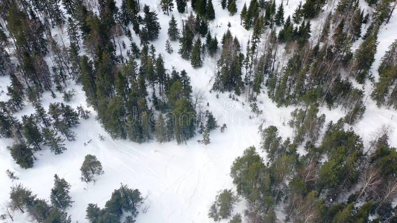 Τοπ άποψη των ανθρώπων που χάνεται στο δάσος το χειμώνα footage Η ομάδα ενεργών τουριστών χάθηκε στο πυκνό κωνοφόρο δάσος επάνω στοκ εικόνα με δικαίωμα ελεύθερης χρήσης
