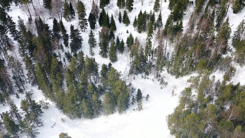 Τοπ άποψη των ανθρώπων που χάνεται στο δάσος το χειμώνα footage Η ομάδα ενεργών τουριστών χάθηκε στο πυκνό κωνοφόρο δάσος επάνω στοκ φωτογραφία