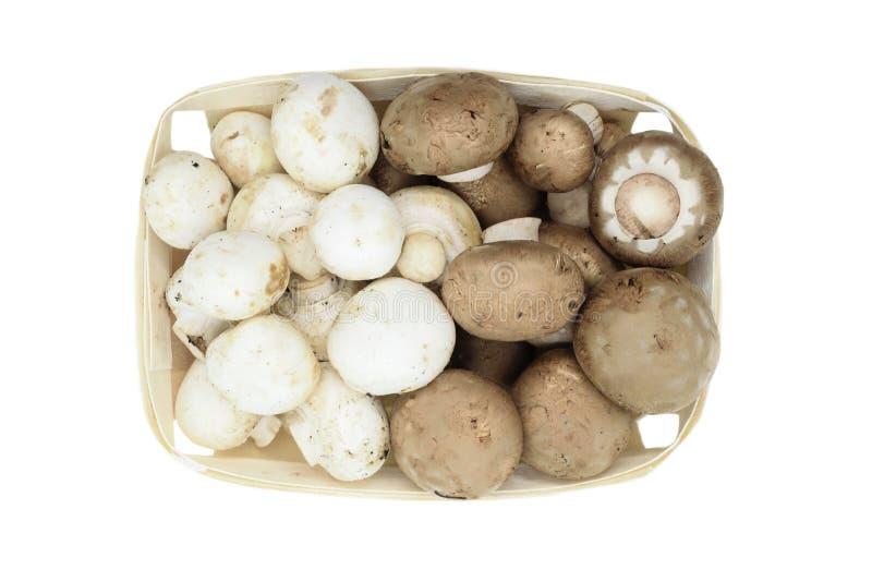 Τοπ άποψη των καφετιών και άσπρων champignons μανιταριών που τοποθετούνται στο ξύλινο καλάθι και που απομονώνονται στο άσπρο υπόβ στοκ φωτογραφίες με δικαίωμα ελεύθερης χρήσης