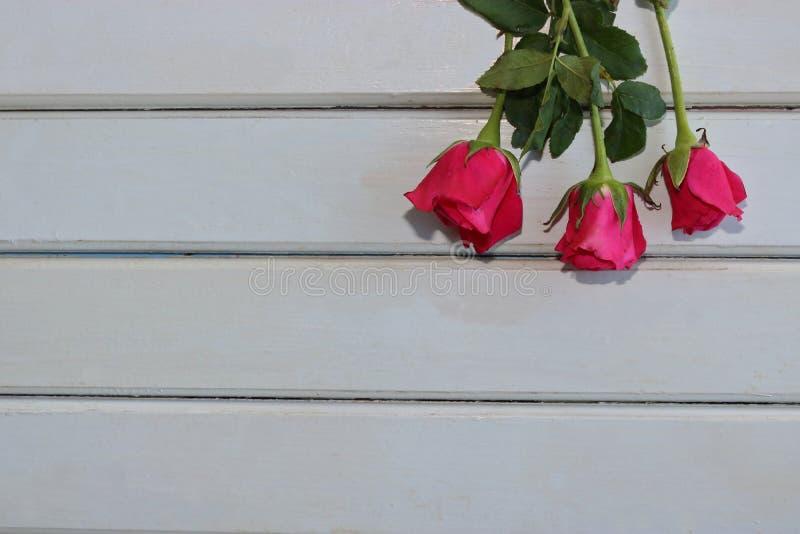 Τοπ άποψη των τριαντάφυλλων στο λευκό ξύλινο πίνακα με το διαστημικό υπόβαθρο αντιγράφων για την έννοια ημέρας βαλεντίνων στοκ εικόνες με δικαίωμα ελεύθερης χρήσης
