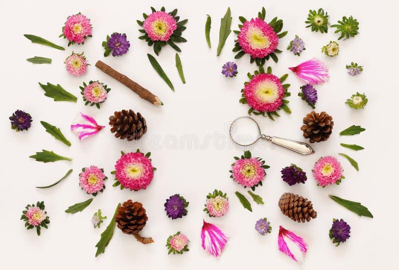 Τοπ άποψη των όμορφων ρόδινων λουλουδιών στοκ εικόνα