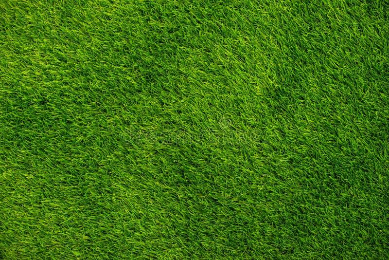 Τοπ άποψη χλόης υποβάθρου πράσινη στοκ εικόνα με δικαίωμα ελεύθερης χρήσης