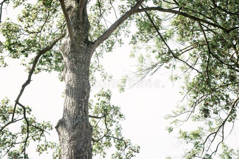 Τοπ και φωτεινός ουρανός δέντρων Taal στοκ φωτογραφία με δικαίωμα ελεύθερης χρήσης