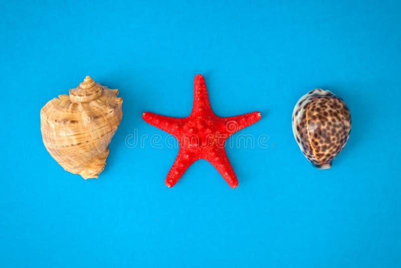 Τοπ κοχύλια και αστερίας ρ θάλασσας άποψης στοκ φωτογραφίες με δικαίωμα ελεύθερης χρήσης