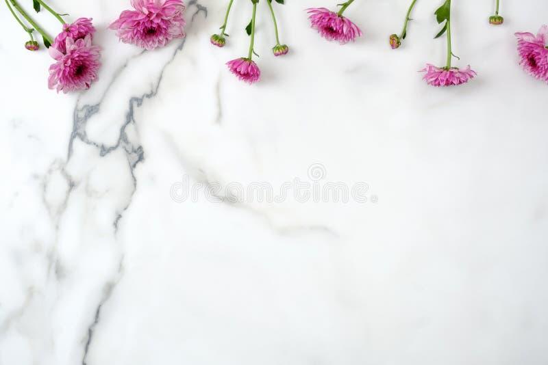 Τοπ πλαίσιο συνόρων λουλουδιών Ρόδινο κεφάλι λουλουδιών μαργαριτών που διασκορπίζεται στο μαρμάρινο υπόβαθρο Το δημιουργικό σχεδι στοκ φωτογραφία με δικαίωμα ελεύθερης χρήσης