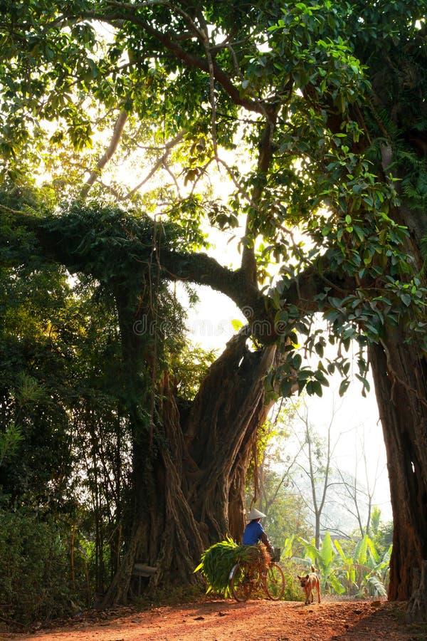 Τοπ χωριό δέντρων Banyan στοκ φωτογραφίες